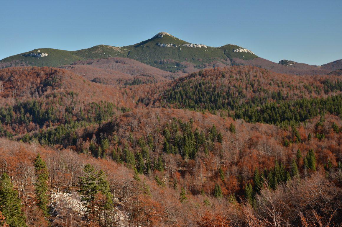 """Vabilo na predavanje """"Snežniški gozdovi vpisani v UNESCO seznam svetovne naravne dediščine"""""""