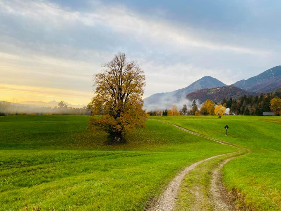 fotografija zelene pokrajine s kolovozom in osamelim drevesom