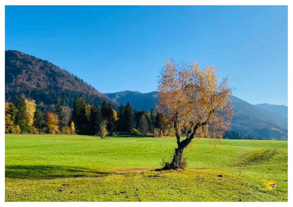 Osamelo drevo na pomladnem travniku